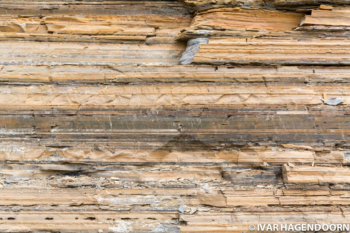 Walcott Quarry Burgess Shale